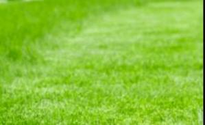 lawn mowing cabramatta